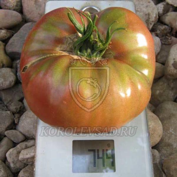 помидоры углерод отзывы фото