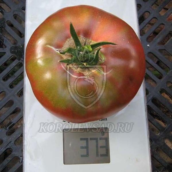 помидоры углерод отзывы фото стрижку рассматриваю